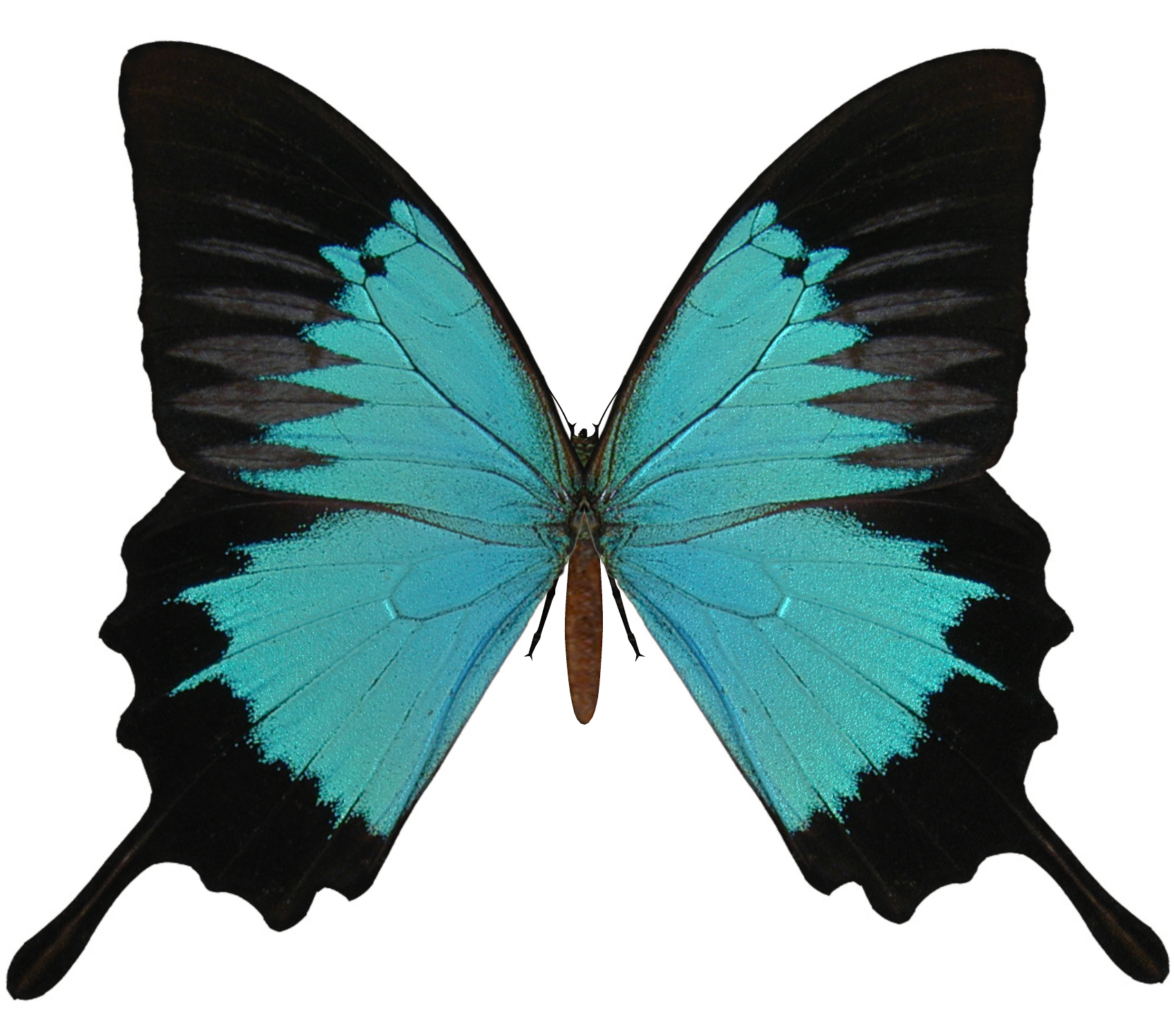 Black And Cyan Butterfly PNG SVG Clip arts