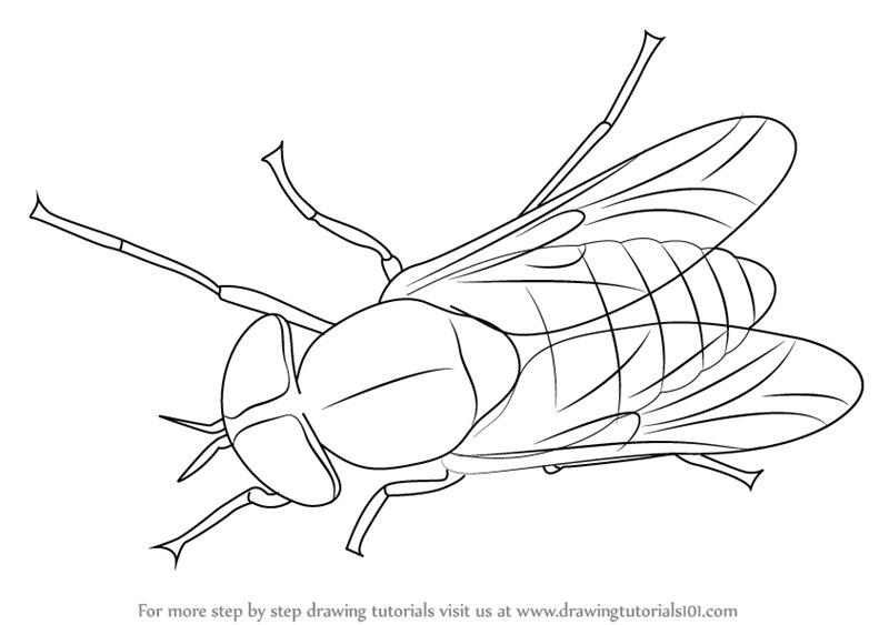 Black Horse Fly Transparent PNG SVG Clip arts