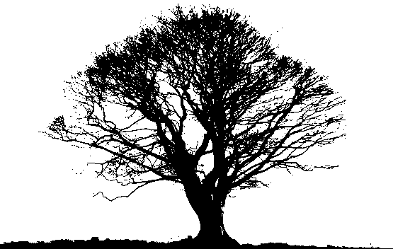 Black Tree PNG Photos SVG Clip arts