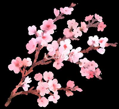 Blossom PNG Transparent Images SVG Clip arts