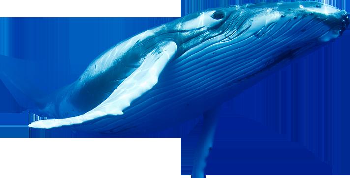 Blue Whale PNG Pic SVG Clip arts