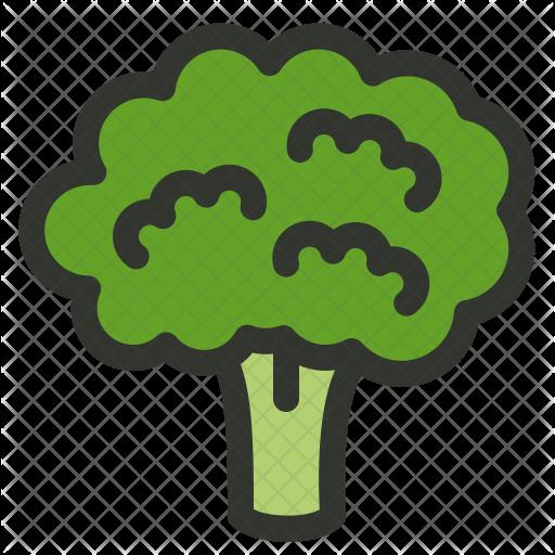 Broccoli PNG Download Image SVG Clip arts