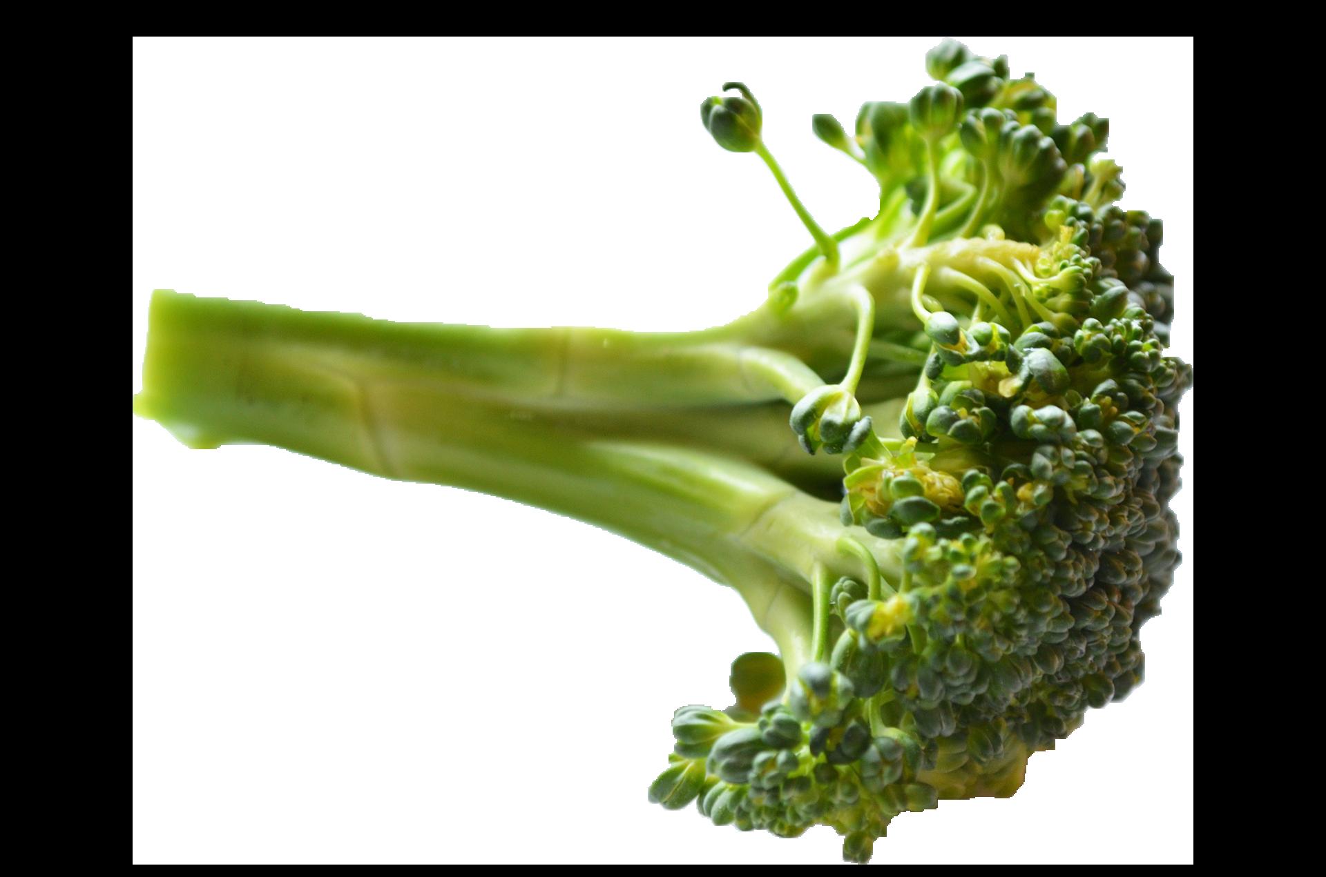 Broccoli PNG Image HD SVG Clip arts