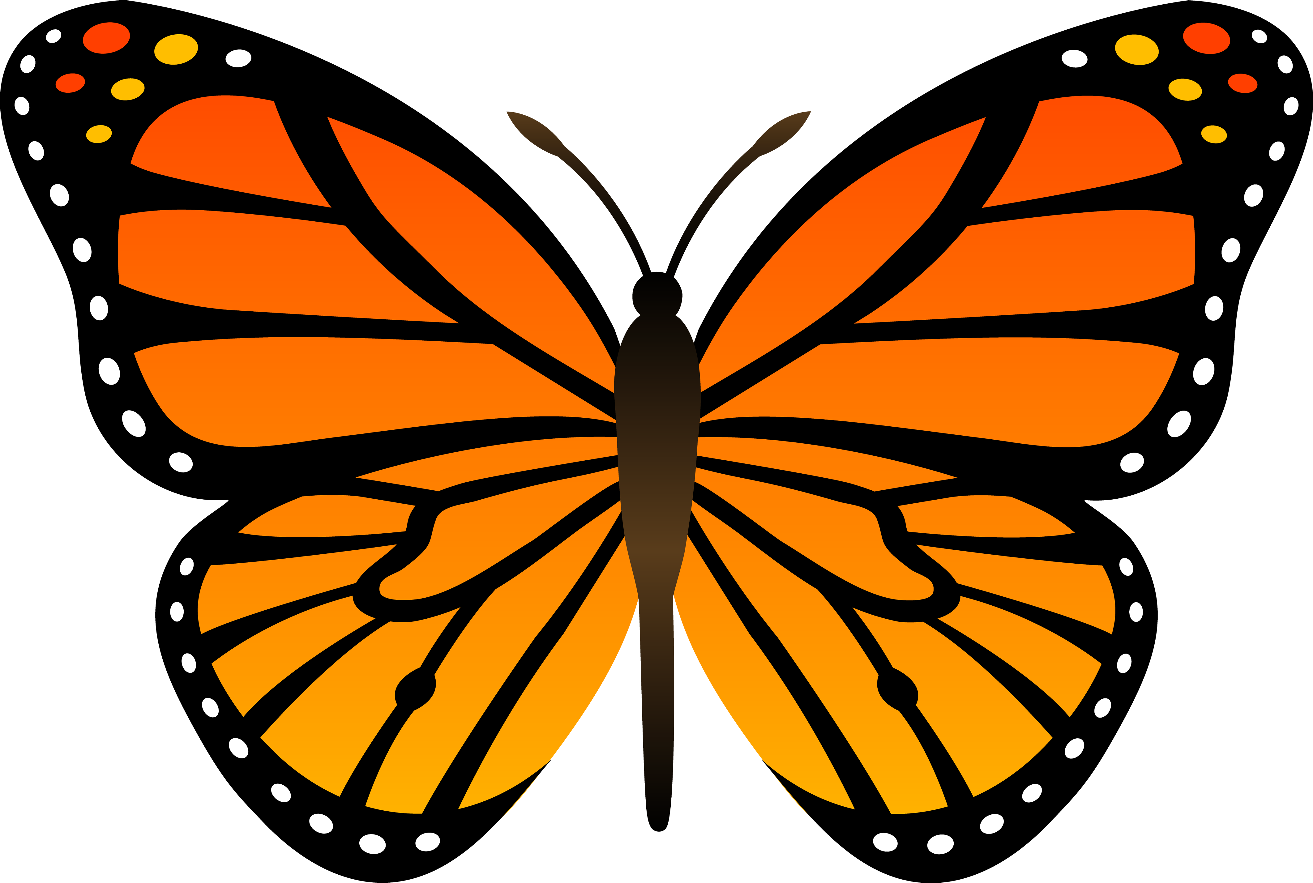 Cartoon Butterfly PNG SVG Clip arts