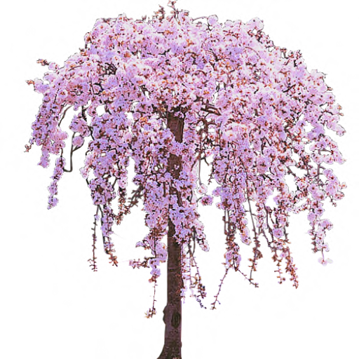 Cherry Tree PNG Clipart SVG Clip arts