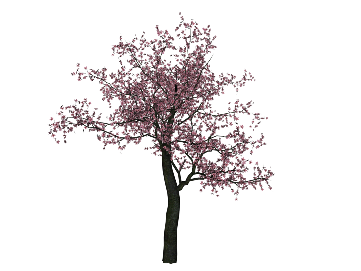 Cherry Tree PNG Image PNG file