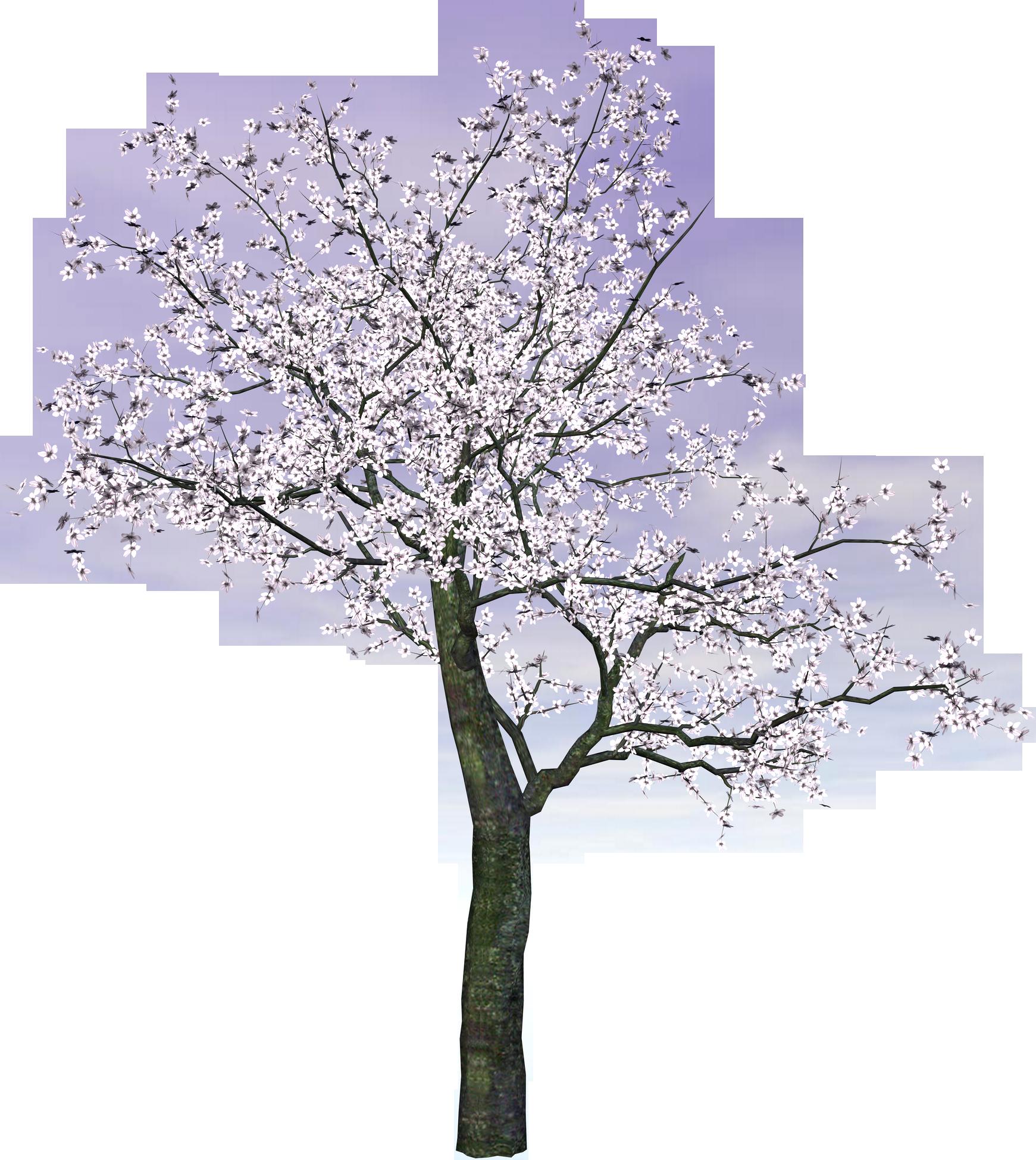 Cherry Tree PNG Transparent Image SVG Clip arts