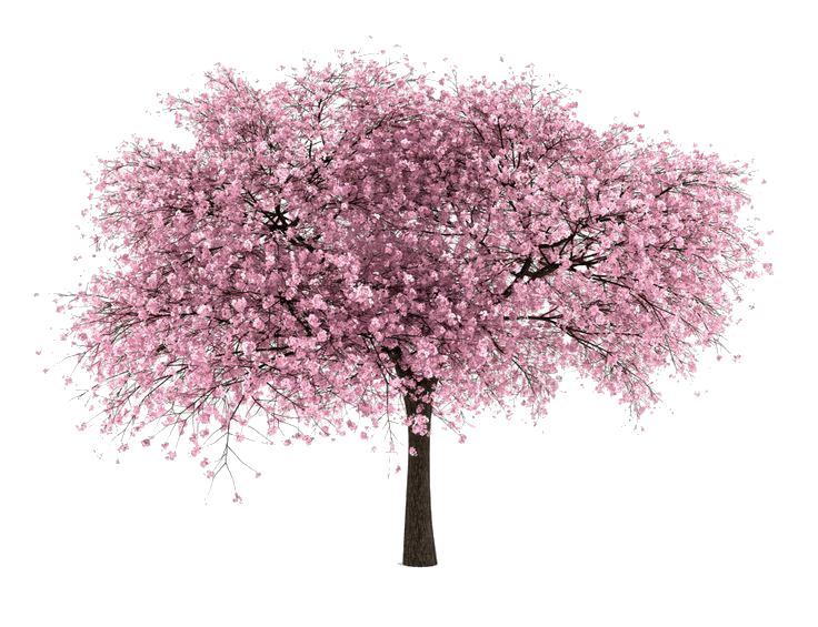 Cherry Tree SVG Clip arts