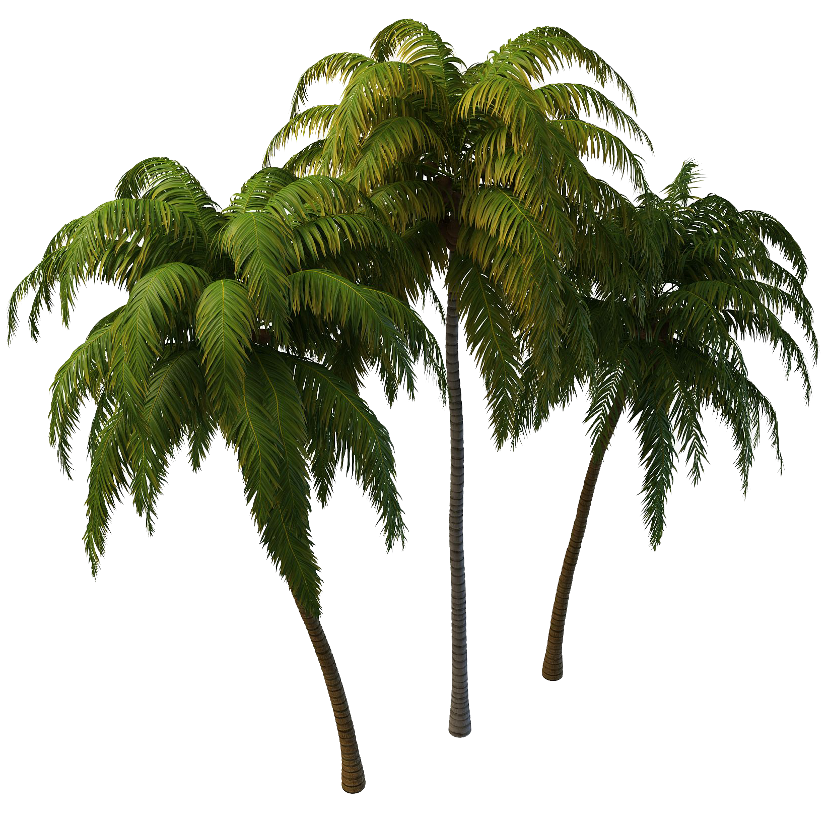 Coconut Tree PNG Photos SVG Clip arts