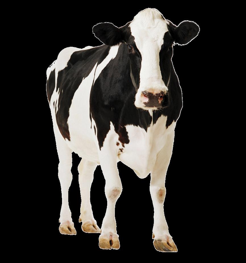 Cow PNG Clipart SVG Clip arts