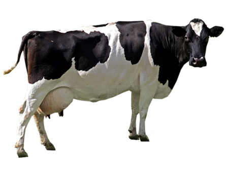 Cow PNG File SVG Clip arts
