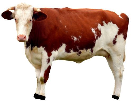 Cow PNG Free Download SVG Clip arts