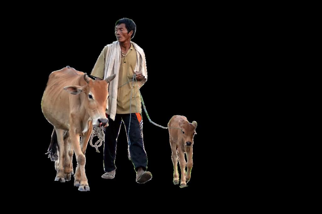 Cow PNG Image SVG Clip arts