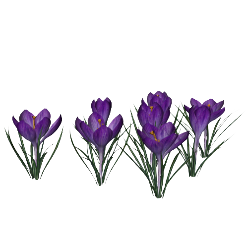 Crocus PNG Photo SVG Clip arts