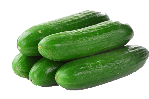 Cucumbers PNG File SVG Clip arts