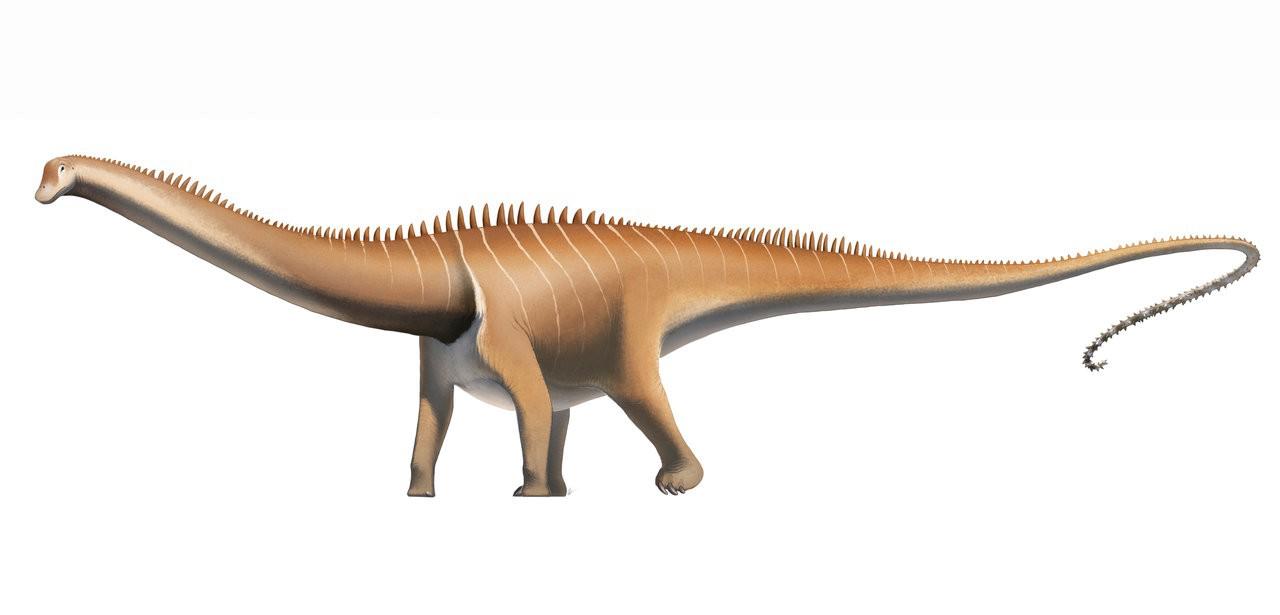 Diplodocus PNG Pic SVG Clip arts