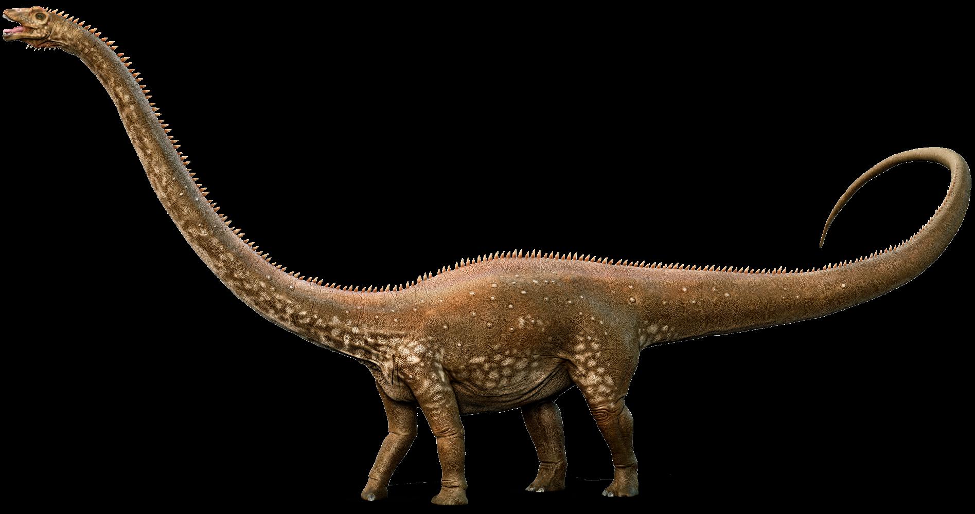 Diplodocus PNG Picture SVG Clip arts