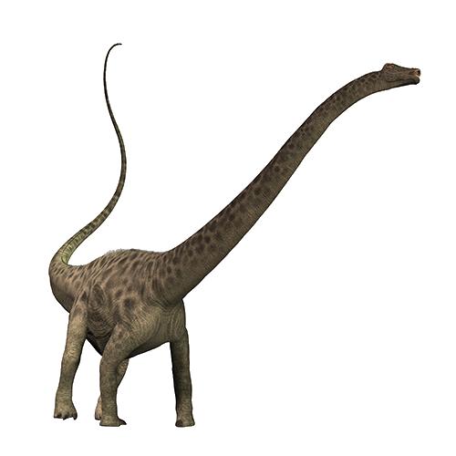 Diplodocus PNG Transparent Image SVG Clip arts