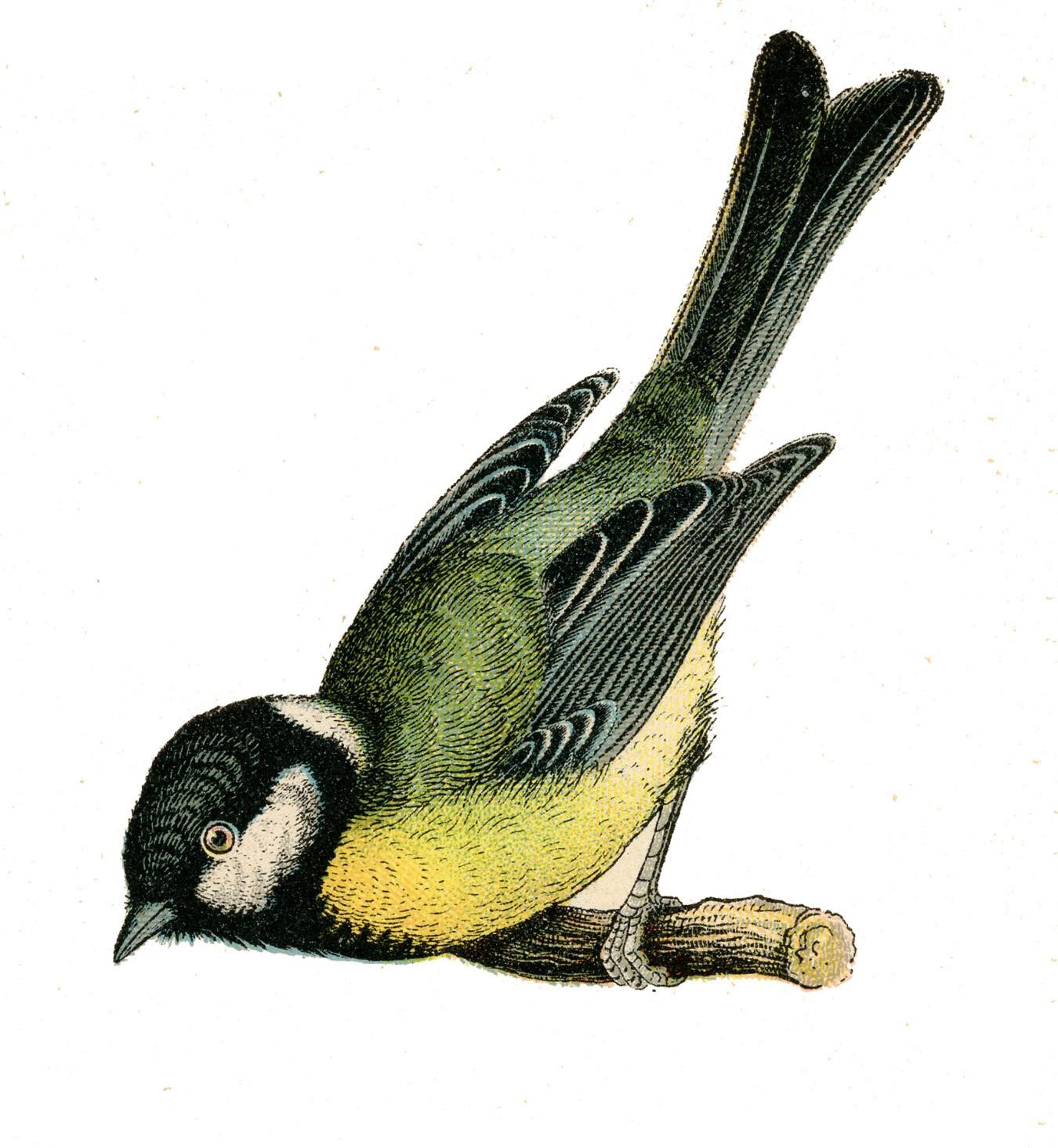 Fairy Bird PNG Clipart SVG Clip arts