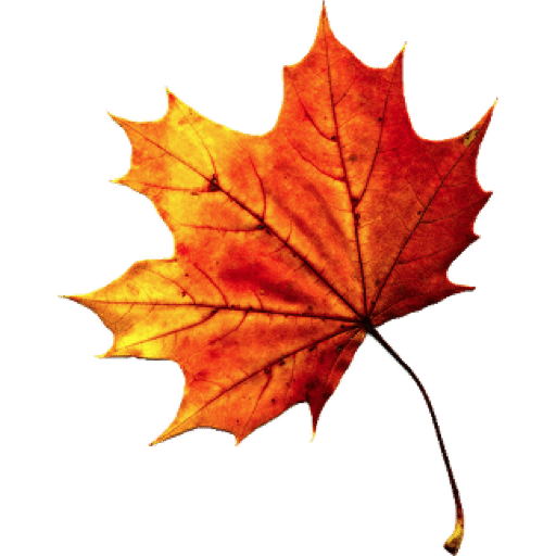 Fall Autumn Leaves Transparent PNG PNG file