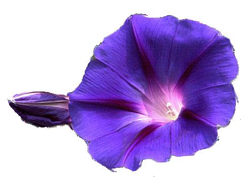 Flowers PNG Transparent Image SVG Clip arts