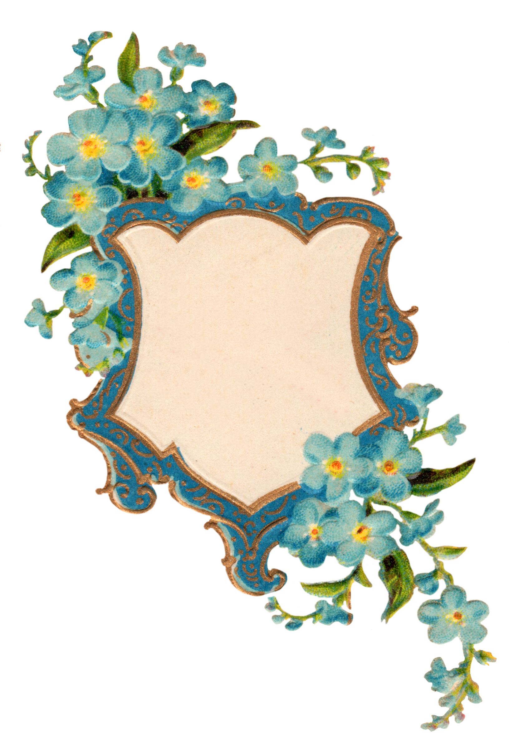 Forget Me Not PNG Picture SVG Clip arts