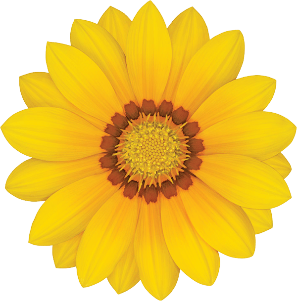 Gazania Transparent PNG SVG Clip arts