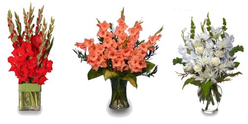 Gladiolus PNG Image SVG Clip arts