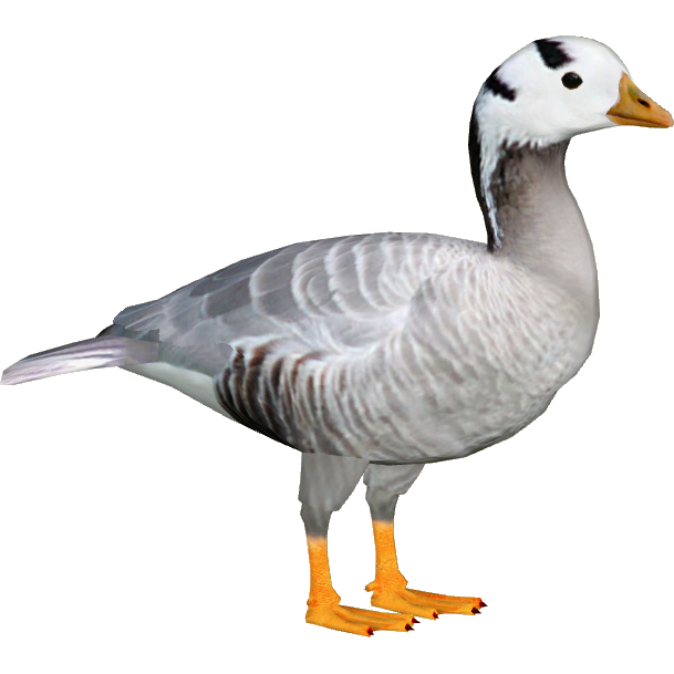 Goose PNG File SVG Clip arts