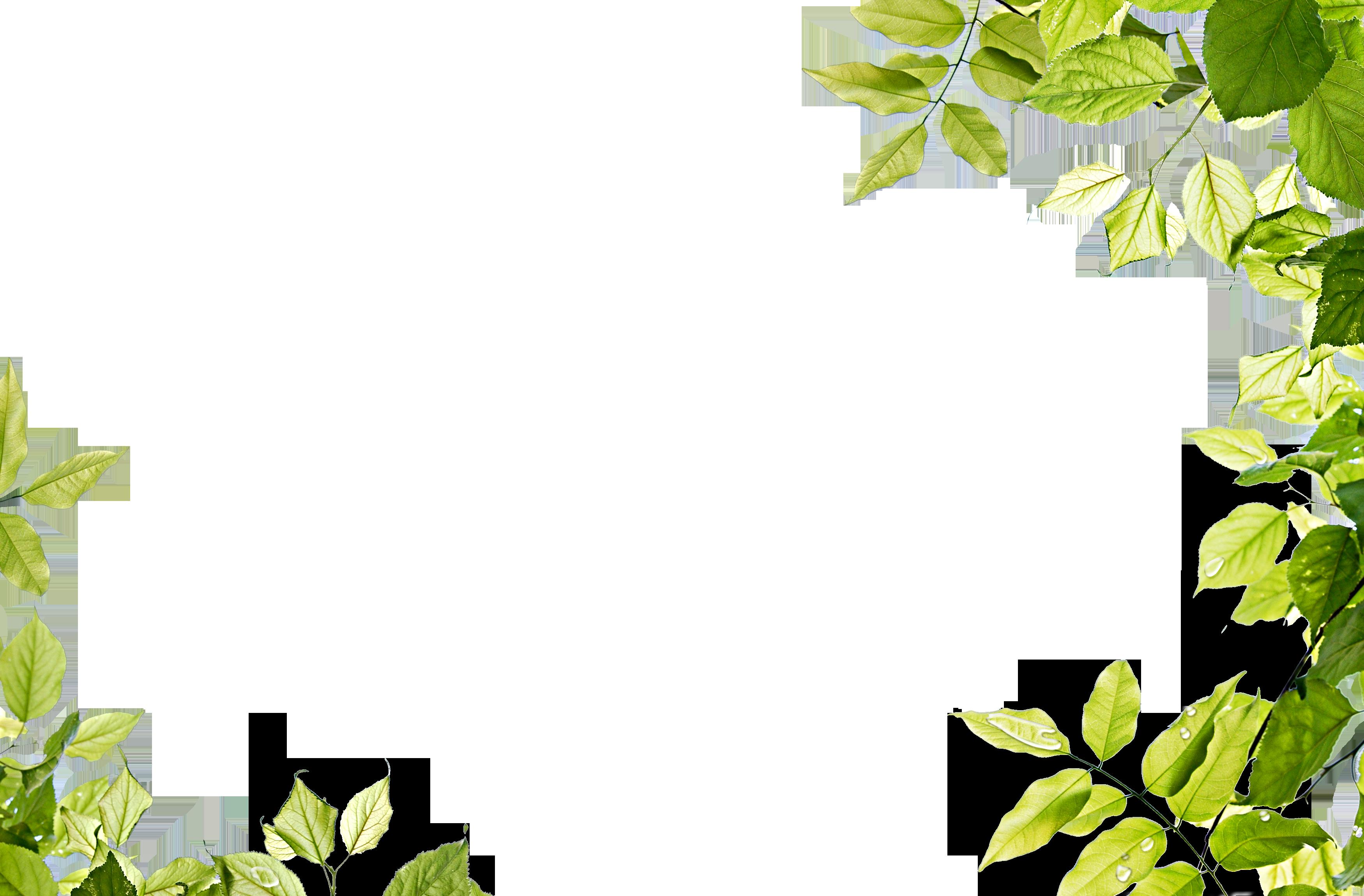 Green Background PNG Transparent Image SVG Clip arts