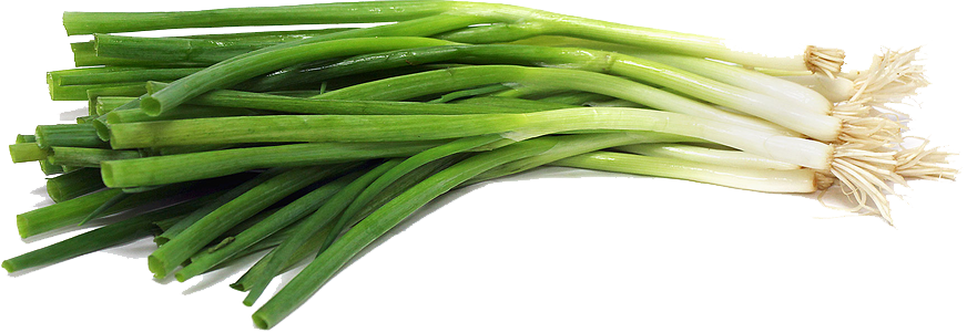 Green Onion PNG File SVG Clip arts