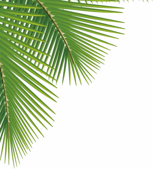 Green Palm Leaves PNG Image SVG Clip arts