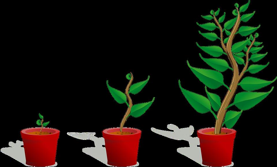 Growing Plant PNG Transparent SVG Clip arts
