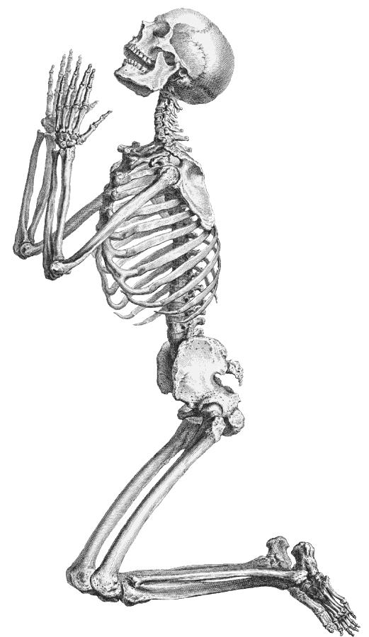 Halloween Skeleton Transparent Background SVG Clip arts
