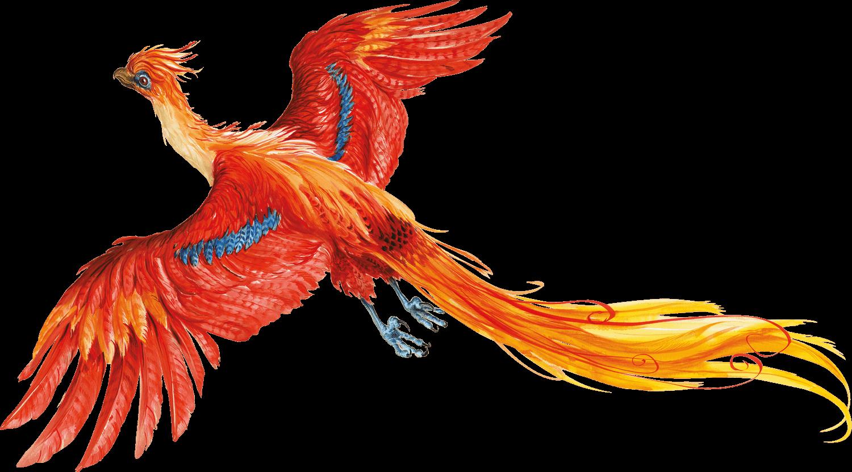 Harry Potter PNG No Background SVG Clip arts