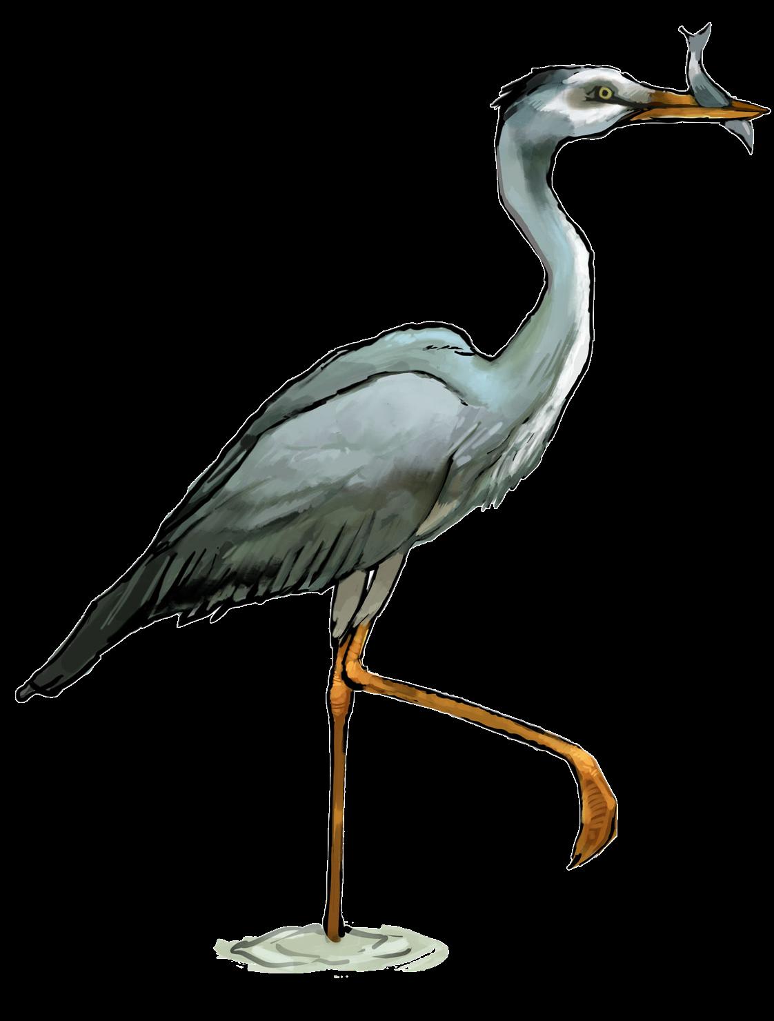 Heron PNG Transparent SVG Clip arts