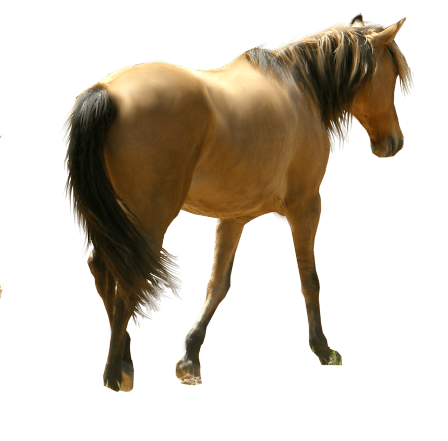 Horse PNG File PNG file
