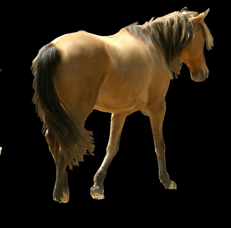Horse PNG File SVG Clip arts