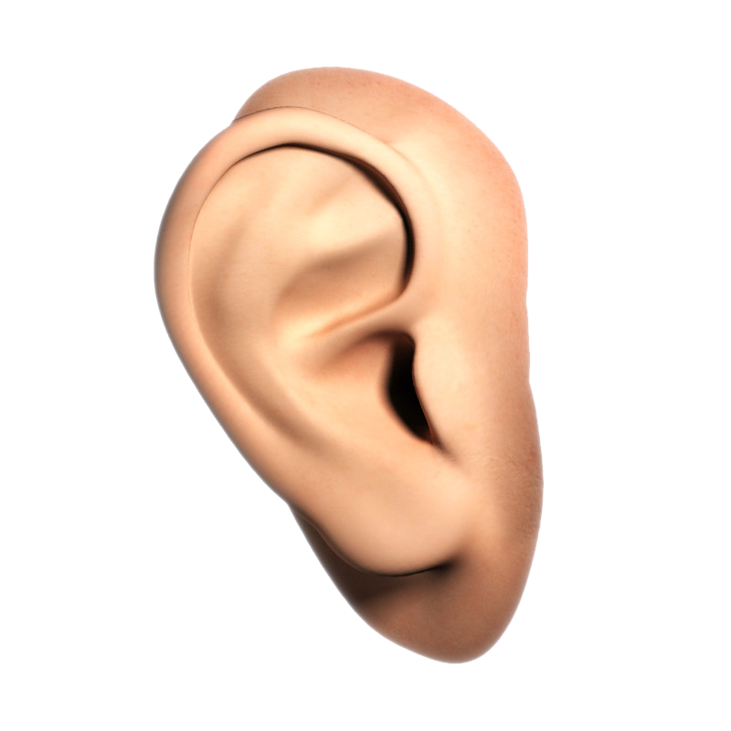 Human Ear PNG File SVG Clip arts