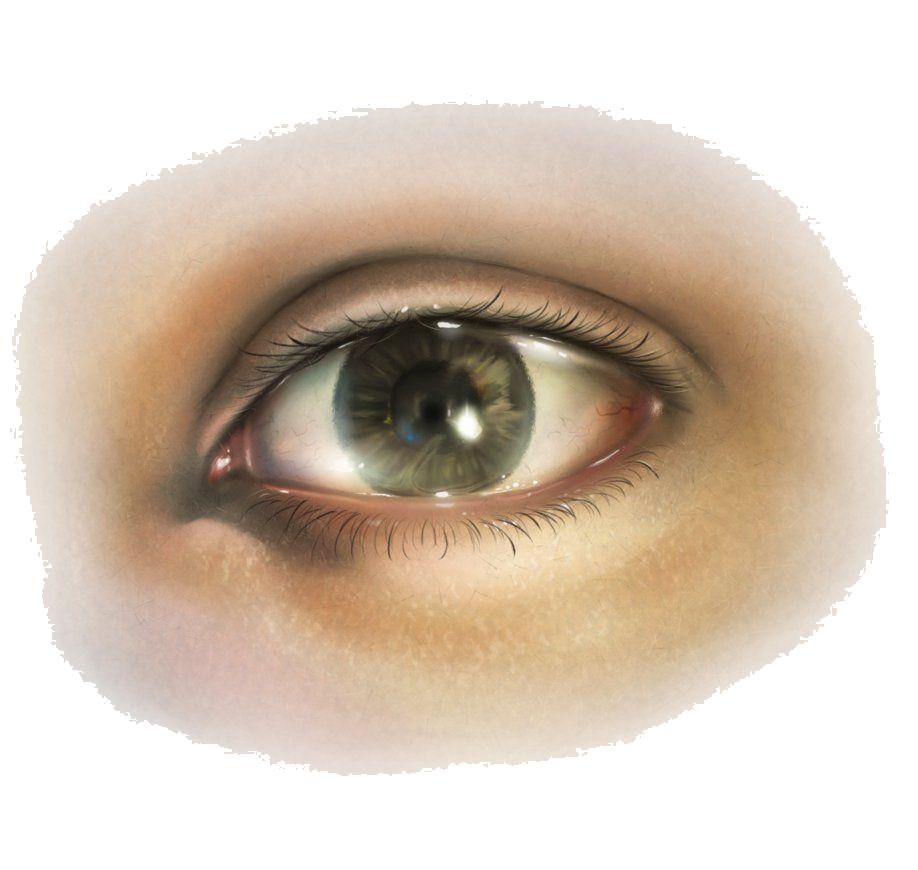 Human eye SVG Clip arts