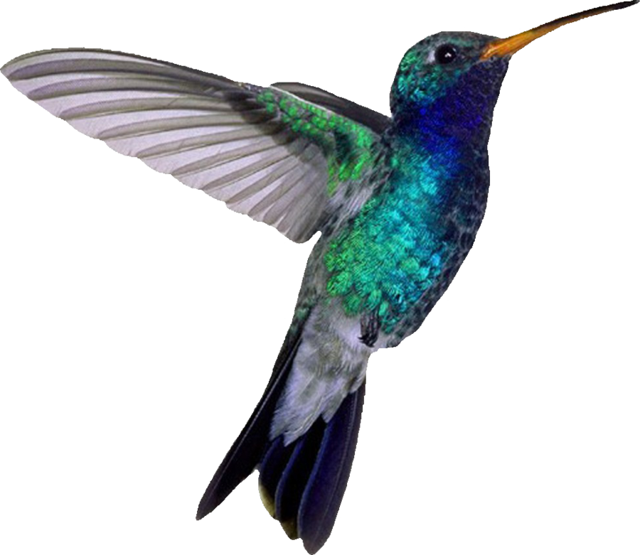 Hummingbird PNG File SVG Clip arts