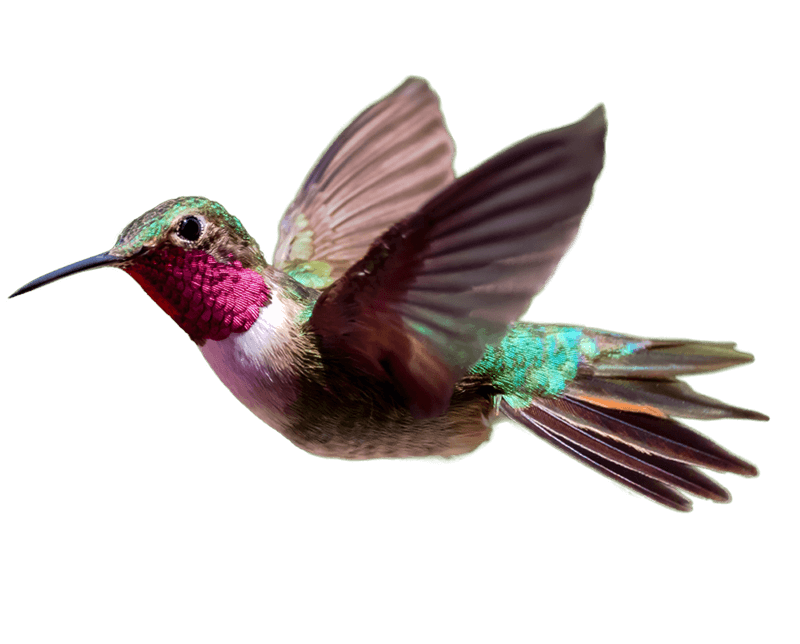 Hummingbird PNG Transparent HD Photo SVG Clip arts