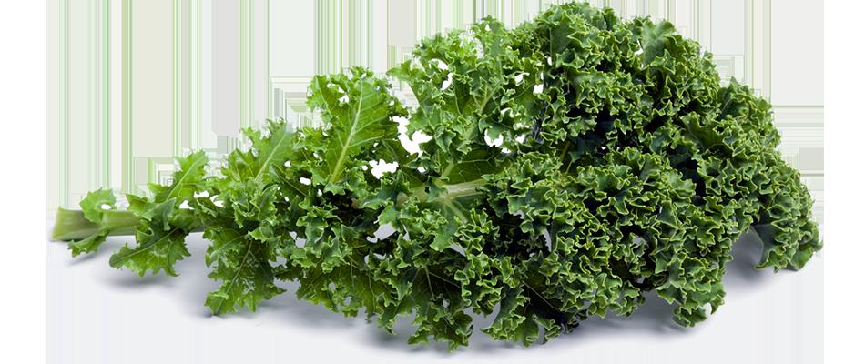 Kale PNG Picture SVG Clip arts