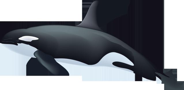 Killer Whale PNG Image SVG Clip arts