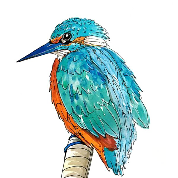 Kingfisher PNG Transparent Picture SVG Clip arts