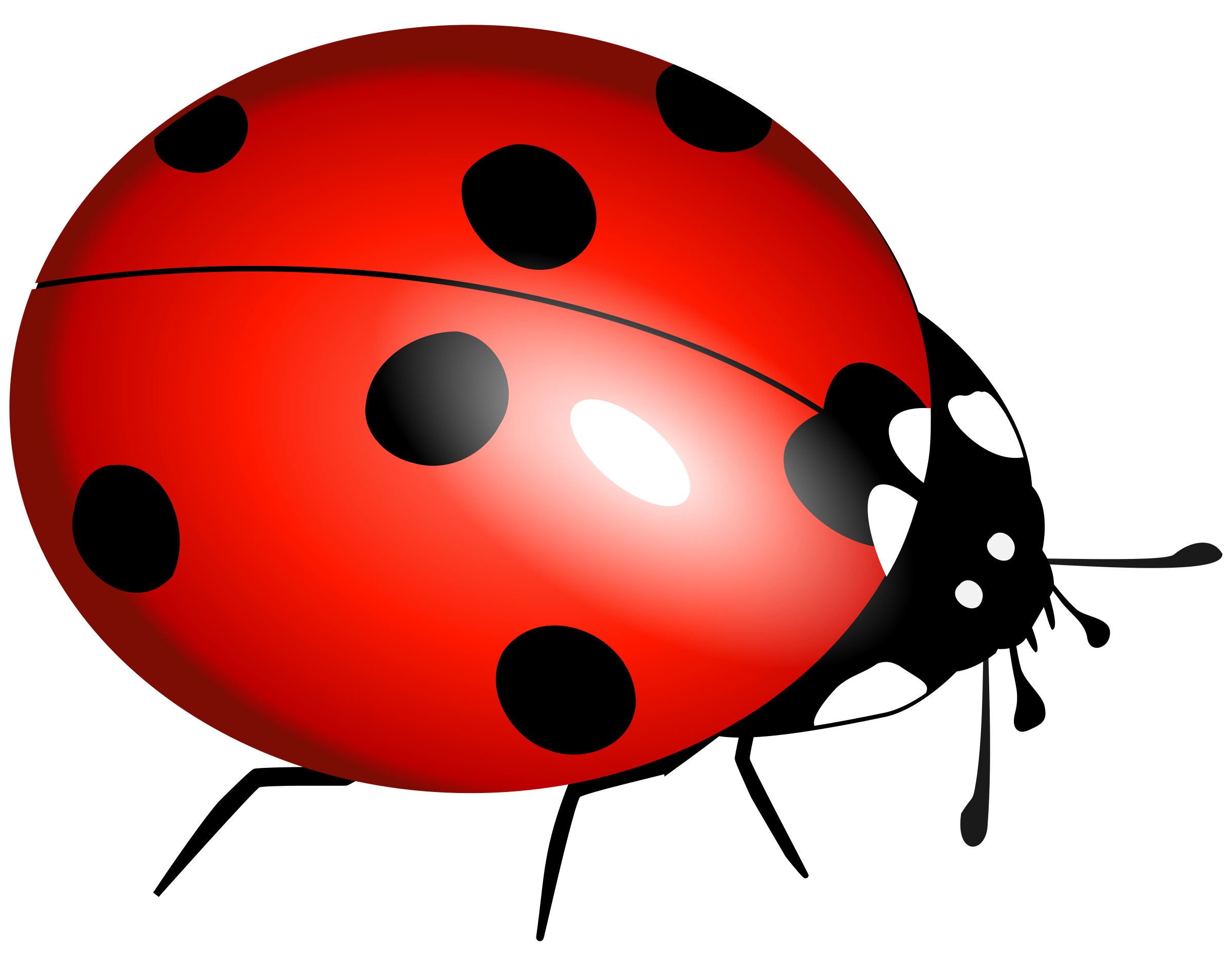 Ladybird PNG Picture SVG Clip arts