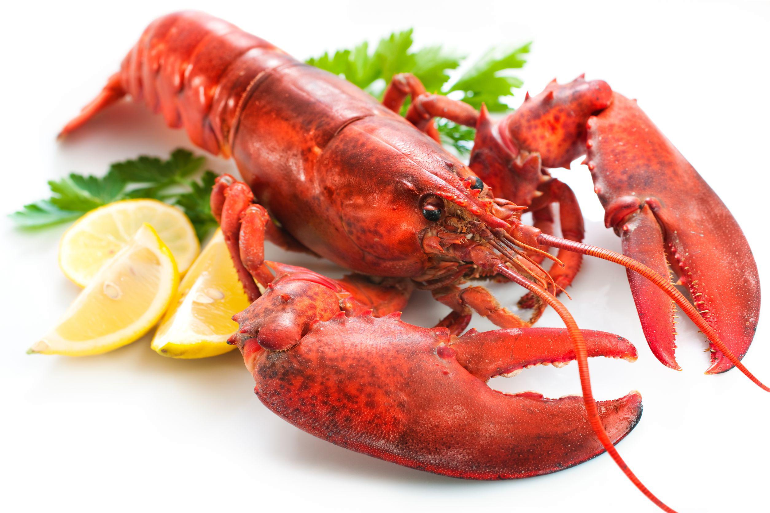 Lobster Transparent PNG SVG Clip arts