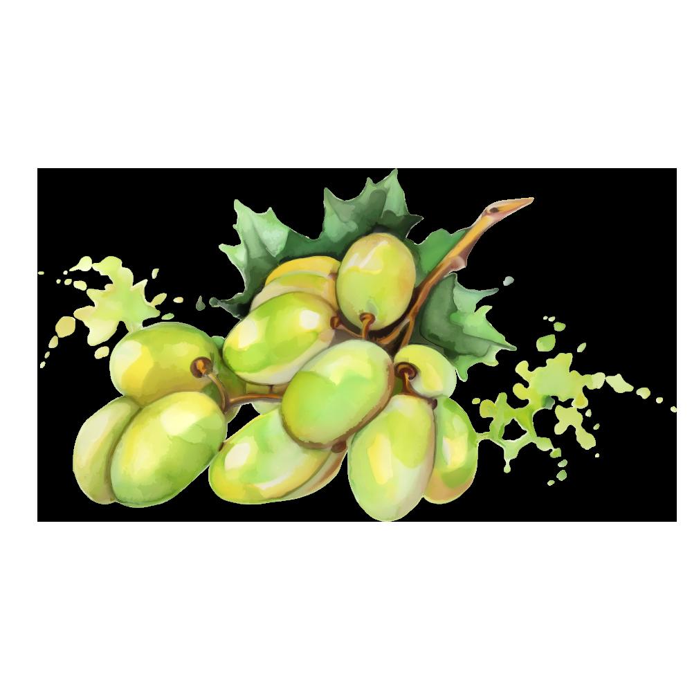 Mango PNG No Background SVG Clip arts