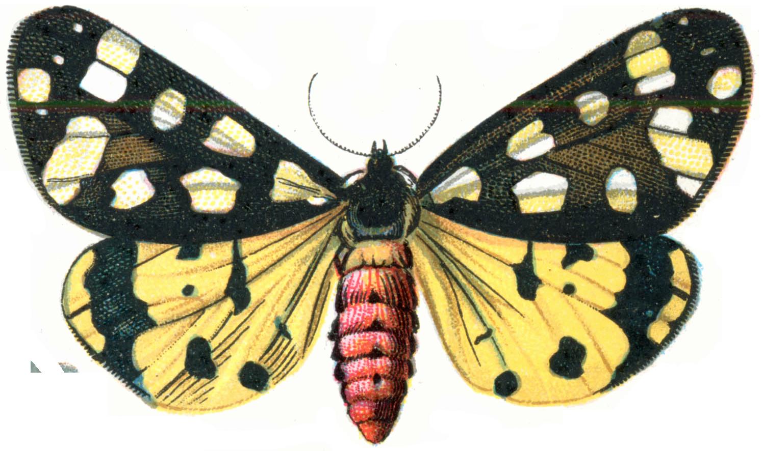 Moth PNG Image SVG Clip arts
