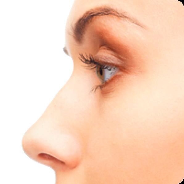Nose PNG Transparent SVG Clip arts